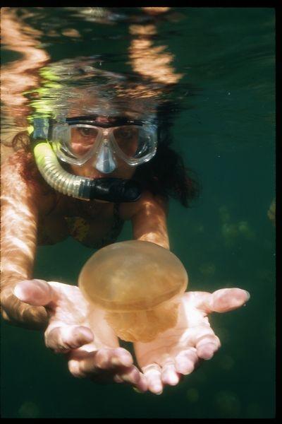 tn_001-4-stingless-jellyfish