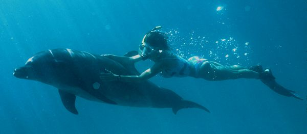 tn_16-dolphins-in-palau-large